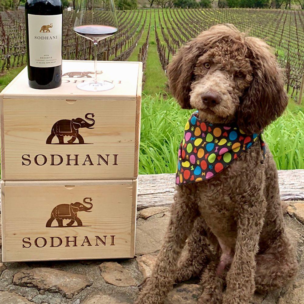 Wine Pup Cabernet